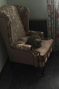 Частный интерьер, английское кресло с ушами в комбинированной обивке